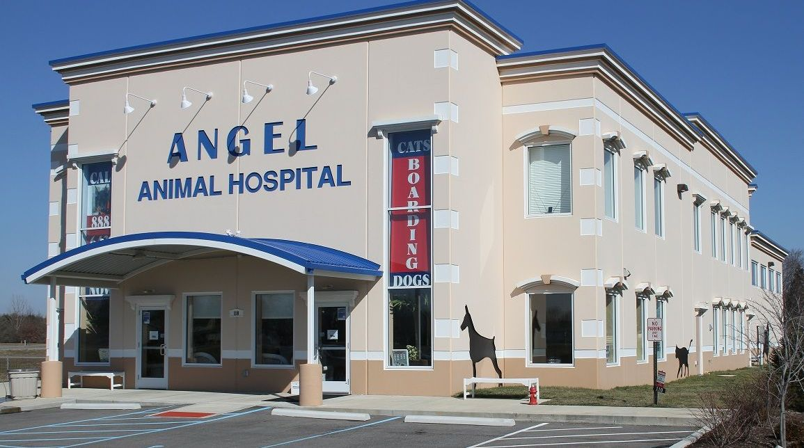 angel-animal-hospital-greenwood-indiana-b
