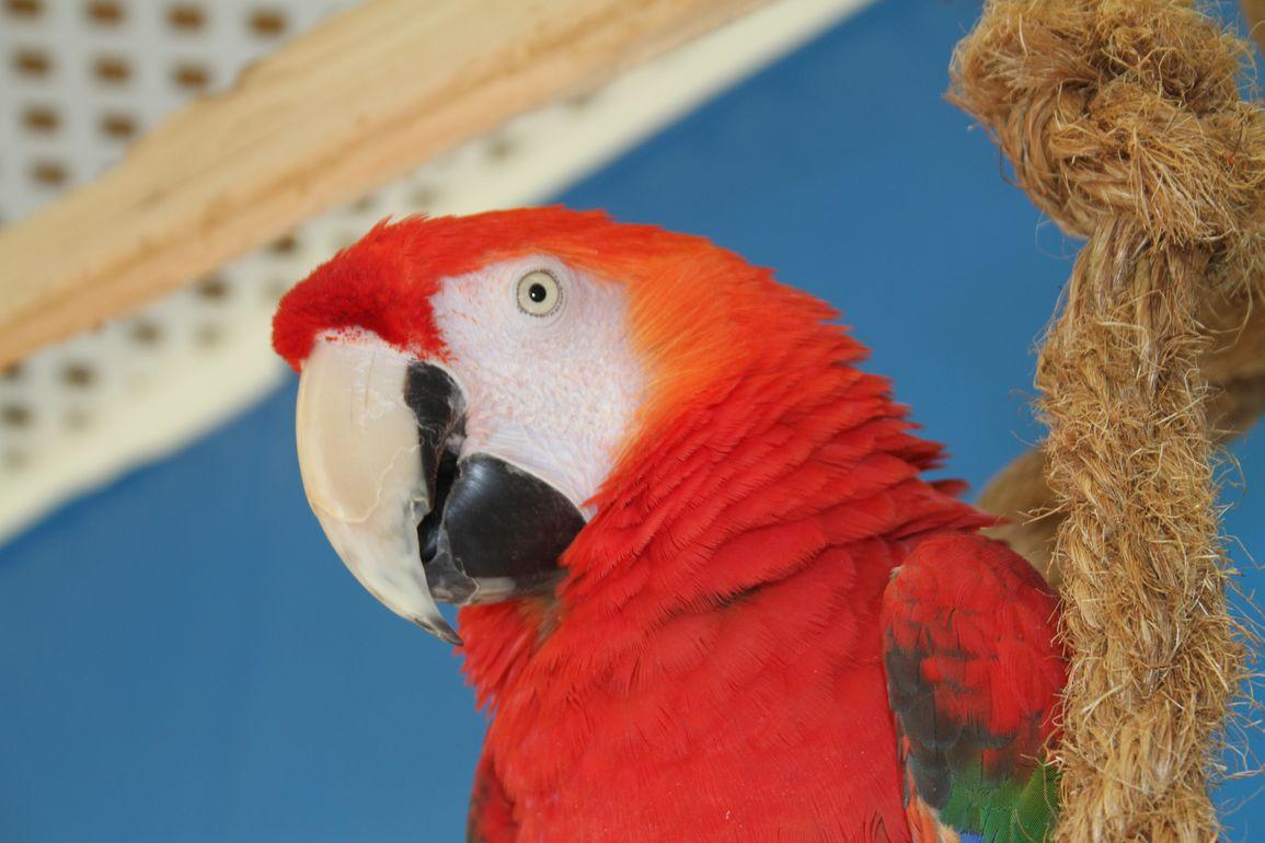 angel-animal-hospital-greenwood-veterinarian