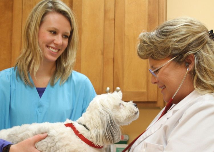 Above: Angel Animal Hospital's Dr. Anna Piper (right) inspects a patient
