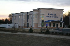 Angel Animal Hospital