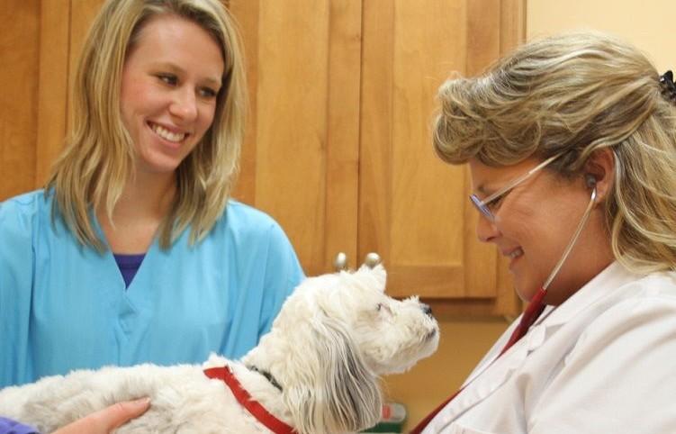 veterinarian-greenwood-dr-anna-piper