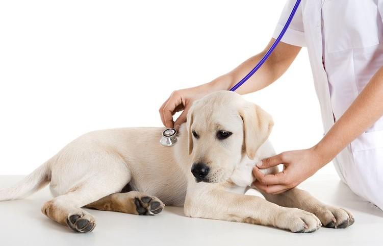 Greenwood Indiana veterinarian Canine Influenza