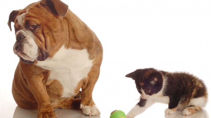 pet-diabetes-month-greenwood-veterinarian-angel