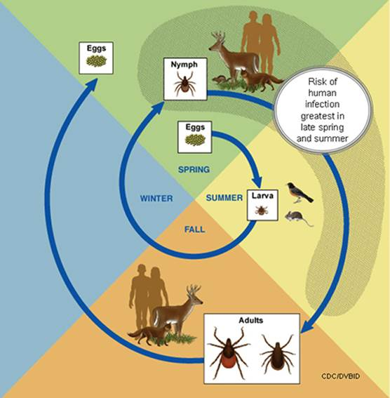 What can you do to prevent ticks in your environment?